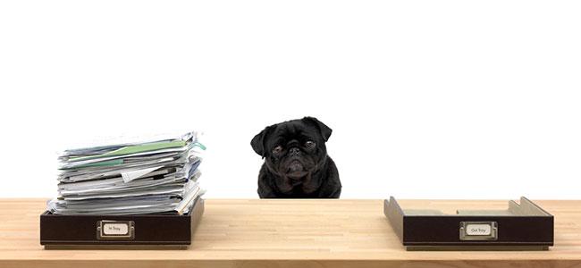 bureaucracy dog says 'so?'